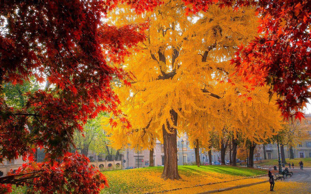 Forestazione urbana| Gli alberi che cambiano le città.