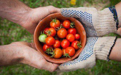 World Food Day|Sostenibile è meglio